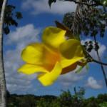 Bela flor